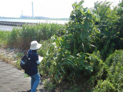 植物調査2